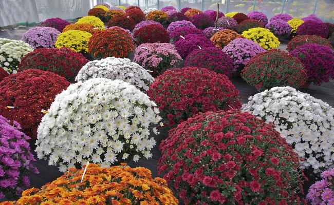 Votre fleuriste ouvert ce week-end !